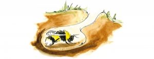 Hibernating queen bumblebee illustration