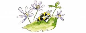 Mating bumblebees lifecycle illustration