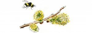 Spring bumblebee lifecycle illustration