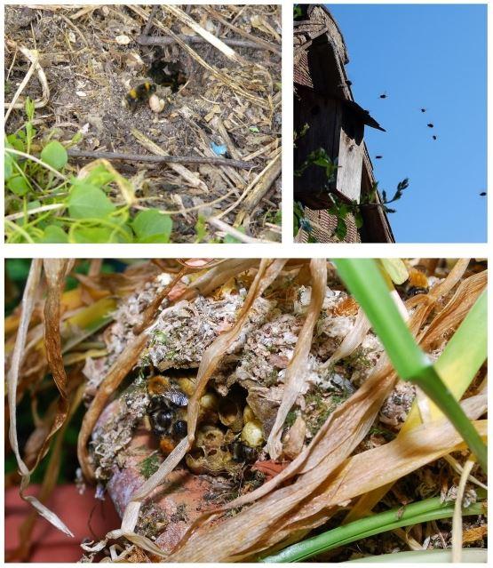 Bumblebee nest FAQs - Bumblebee Conservation Trust