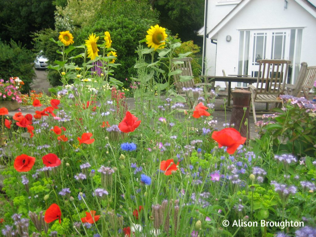 Wildflowers For Bees A Beginners Guide To Sowing Wildflower Seed