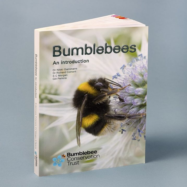 """""""Bumblebees - an introduction"""" NEW!"""