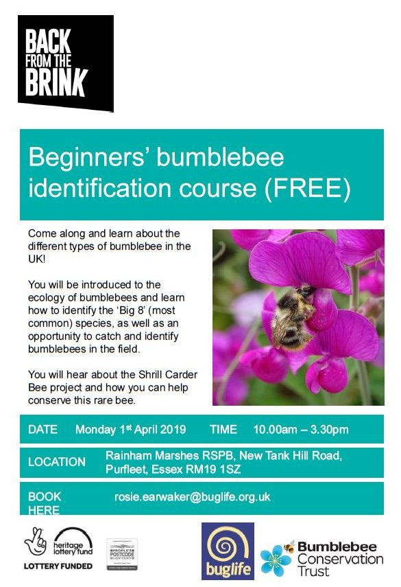 Beginners' bumblebee ID course @ Rainham Marshes, Essex, RM19 1SZ | Purfleet | England | United Kingdom