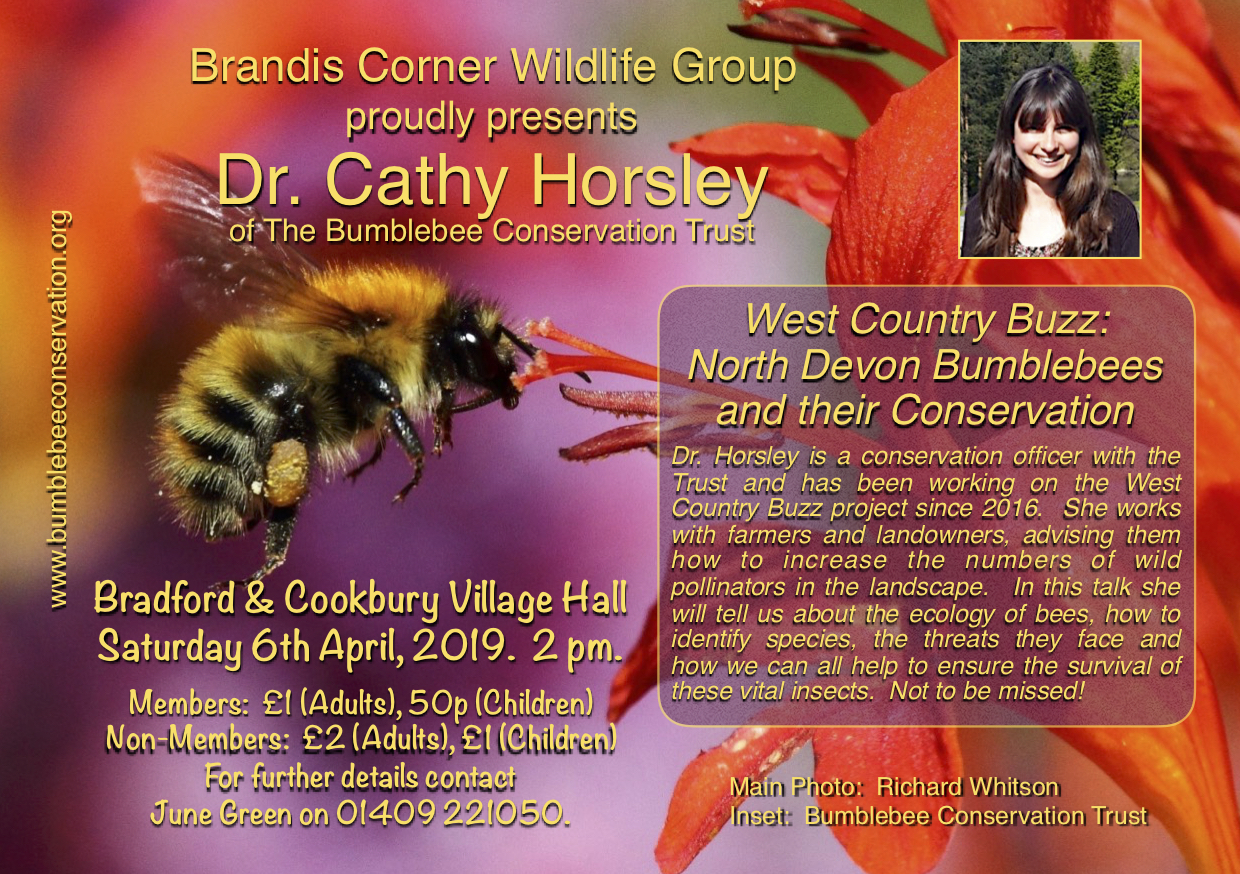 Talk: North Devon Bumblebees and their Conservation @ Bradford and Cookbury village hall, Devon | Bradford | England | United Kingdom